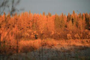 Colori d'Alaska